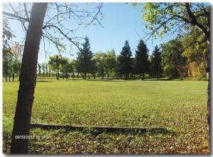 Park 10 500x366